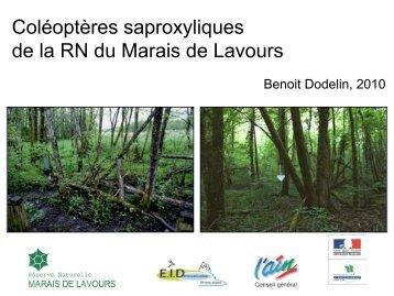 Coléoptères saproxyliques de la RN du Marais de Lavours