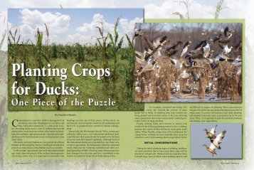 Planting Crops for Waterfowl