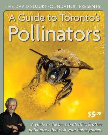 A Guide to Toronto's Pollinators (PDF) - David Suzuki Foundation