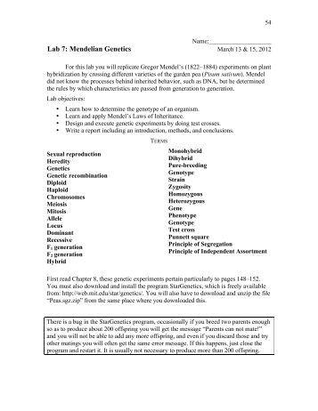 essay genetics essay