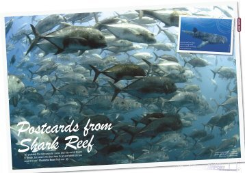 Postcards from Shark Reef - DIVE Magazine, August 2008 (1MB, PDF)