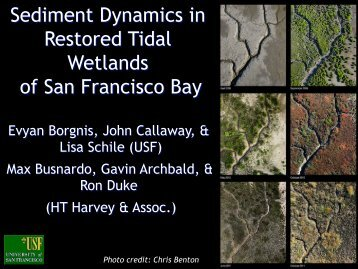 Sediment Dynamics and Vegetation Recruitment in Newly Restored ...