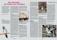 Die Türkiselfe – ein Kolibri zum Verlieben - Gefiederte Welt