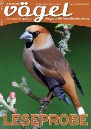 VÖGEL Leseprobe 2012 - Vögel  - Magazin für Vogelbeobachtung