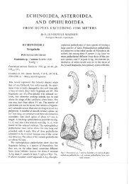 ECHINOIDEA, ASTEROIDEA, AND OBHIUROIDEA