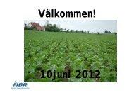 Bladsvampar – allt vi gjort sedan 2004 - nordicbeet.nu