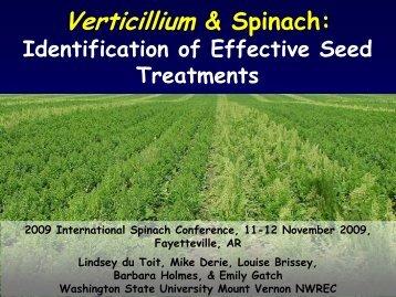 Verticillium & Spinach: - Washington State University