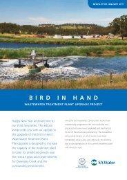 Bird in Hand Newsletter, January 2011 - SA Water