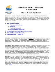 SPRUCE UP AND OVER-SEED YOUR LAWN - Star Nursery