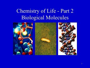 Chemistry of Life - Part 2 Biological Molecules