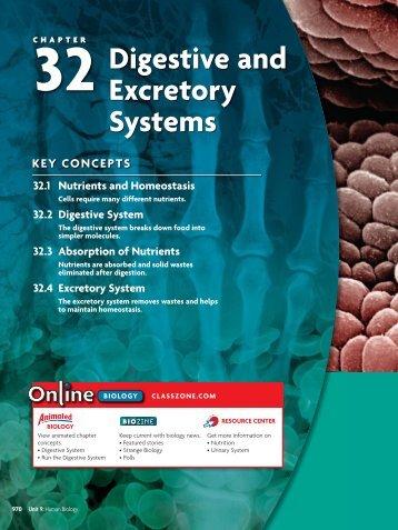 32.4 Excretory System