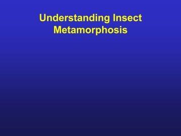Understanding Insect Metamorphosis - PACE Turf