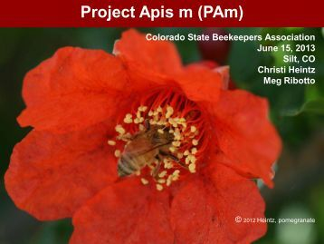 Project Apis m (PAm) - Colorado State Beekeepers Association