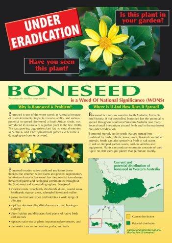 BONESEED - Weeds Australia