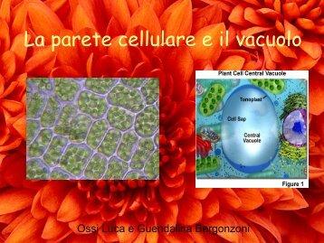 La parete cellulare e il vacuolo - Polo Valboite