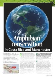 P49-53 Saving the Lemur frog.indd - Frog Blog Manchester