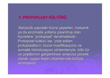 Protoplast Kültürü Yapılışı