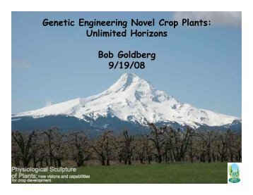 Download pdf - Gene Networks in Seed Development