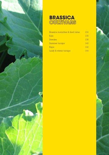 Brassica Cultivars - Agriseeds Pasture Site