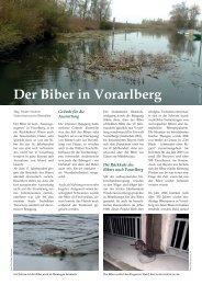 Der Biber in Vorarlberg