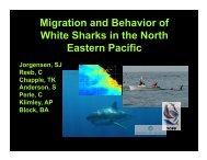 White sharks - Monterey Bay National Marine Sanctuary - NOAA