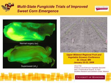 Multi-State Fungicide Trials of Improved Sweet Corn Emergence