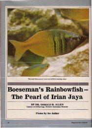 Allen (1984) M boesemani - regenbogenfische.com