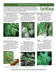 Invasive and Native Trees of the Pacific Northwest - EarthCorps - Page 2