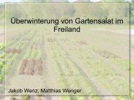 Überwinterung von Gartensalat im Freiland