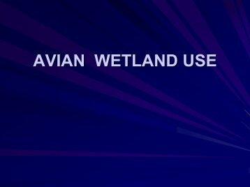 AVIAN WETLAND USE