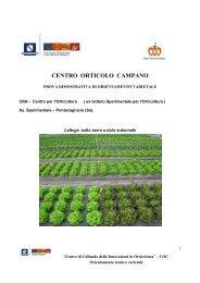 Scarica la relazione Lattuga sotto serra 2007 - Regione Campania