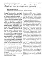 Mapping the Inter-RNA Interaction of Bacterial Virus Phi29 ...