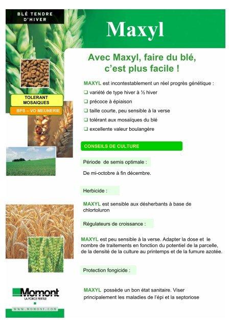 Avec Maxyl, faire du blé, c'est plus facile ! - Momont