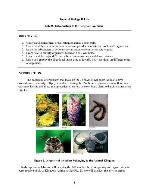 Introduction to the Animal Kingdom pdf