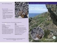 Ciliate strap-lichen: Gift of the Gulf Stream - Plantlife