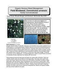 Field Bindweed, Convolvulus arvensis