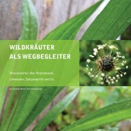 Leseprobe Wildkräuter als Wegbegleiter Monika Wurft.pdf