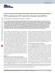 RNA polymerase III transcribes human microRNAs - Gene ...