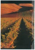 Download - New Zealand Wine - Seite 2
