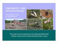 Protected Species Guide for Planning Officers - Merthyr Tydfil ...