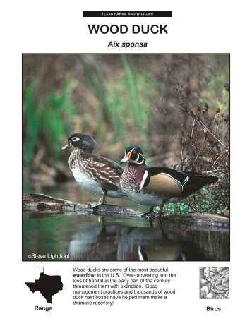 WOOD DUCK - The State of Water