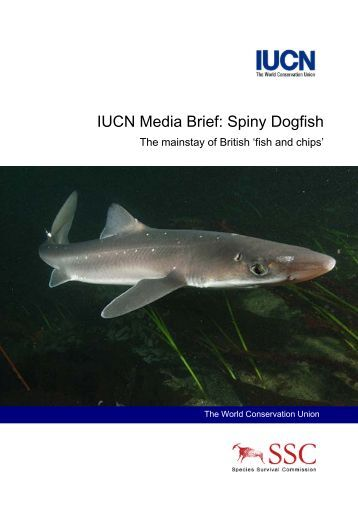 IUCN Media Brief: Spiny Dogfish