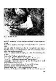 Sterna, bind 9 nr 2 (PDF-fil) - Museum Stavanger - Page 7