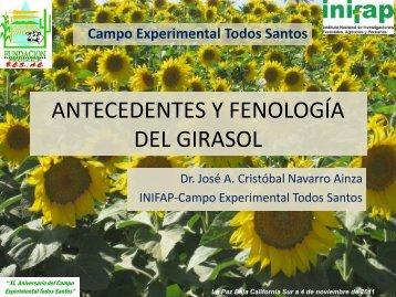 ANTECEDENTES Y FENOLOGÍA DEL GIRASOL