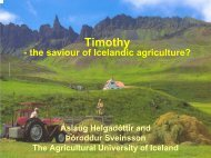 Timothy – the saviour of Icelandic agriculture?
