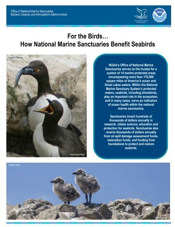new brochure on seabirds - National Marine Sanctuaries - NOAA