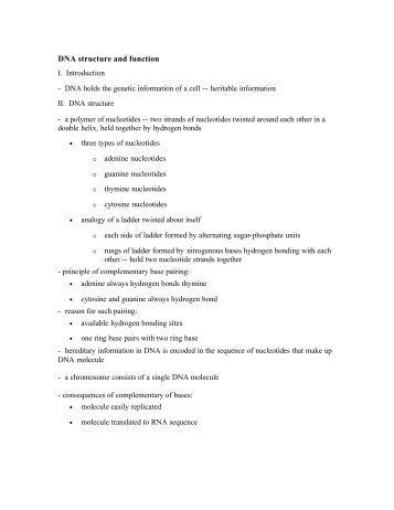 essays structure dna