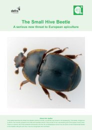 The Small Hive Beetle - Washington State Beekeepers Association