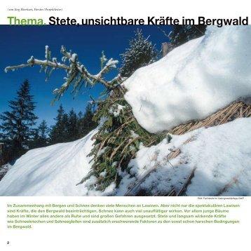 Thema. Stete, unsichtbare Kräfte im Bergwald - Waldwissen.net