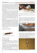Ausgabe 3zweispaltig.indd - FMart - Seite 5